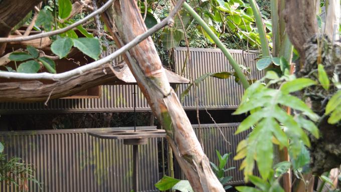 Stelrad K3s keep sloths warm at wildlife park